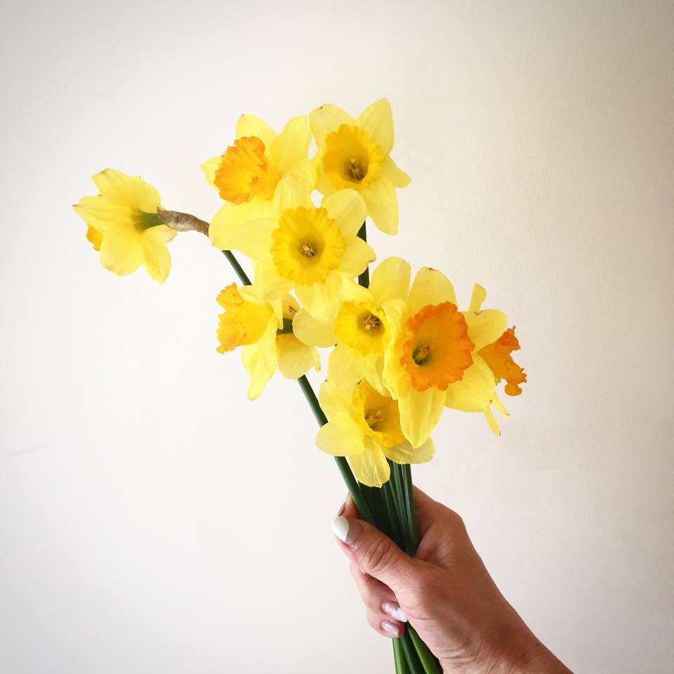 Z-Flower Design+黄色の水仙を見るといっそう春を感じる_2015