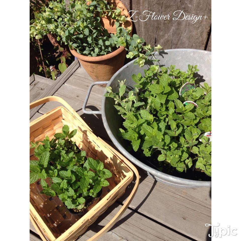 z-flower-design_herb-garden%e3%81%ae%e3%83%af%e3%83%bc%e3%82%af%e3%82%b7%e3%83%a7%e3%83%83%e3%83%97_2014